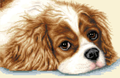 CAVALIER KING CHARLES SPANIEL ~ Complete counted cross stitch kit