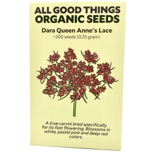 Daucus carota ~200 : Certified Organic Seeds Dara Queen Anne/'s Lace Flower