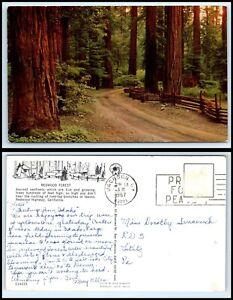 CALIFORNIA-Postcard-Redwood-Forest-O19