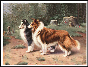 SMOOTH COLLIE DOGS LOVELY VINTAGE STYLE DOG ART PRINT POSTER