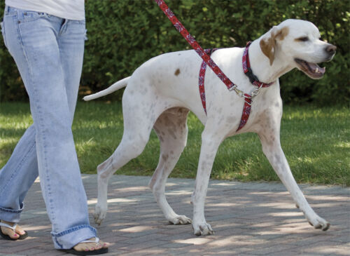 Lupine Dog No-Pull Training Harness, Quick & Simple to Use
