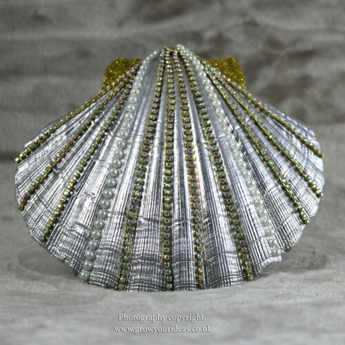 3 x Large Atlantic Scallop seashells.10-11 cm.for crafts /& culinary use