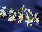ONCIDIUM TWINKLE, MINIATURE ORCHID, BLOOMING SIZE, SHIPPED IN 3