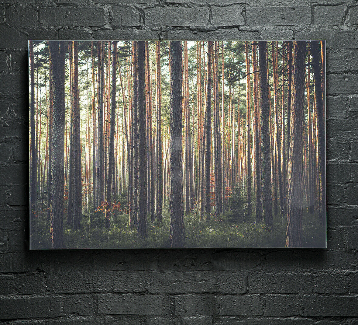 Glass Picture Wall Art Canvas Digital Print ANY Größe Deep Forest Trees p47415