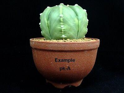 Plant succulent planter 6 pcs black Plastic pot tk-4L square shape