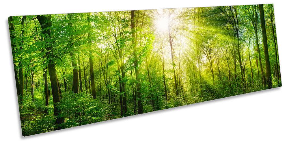 LUCE DEL SOLE verde FORESTA ALBERI ALBERI ALBERI QUADRO PANORAMA Tela Wall Art Print c7ec1f