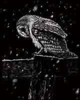 Engraving Scraperfoil Scratch Art Kit Silver Foil Engrave Snowfall At Night Owl