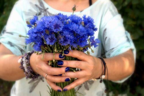 Wild Flower 1000 Seeds  Blue Cornflower meadows Cornflower