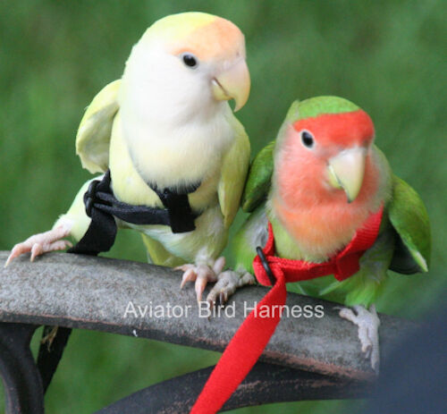 Parrot Bird Aviator Mini Harness for  birds, Parotlets, Budgies, Plum Heads