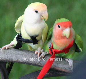 s l300 parrot bird aviator mini harness for lovebirds, parotlets, budgies