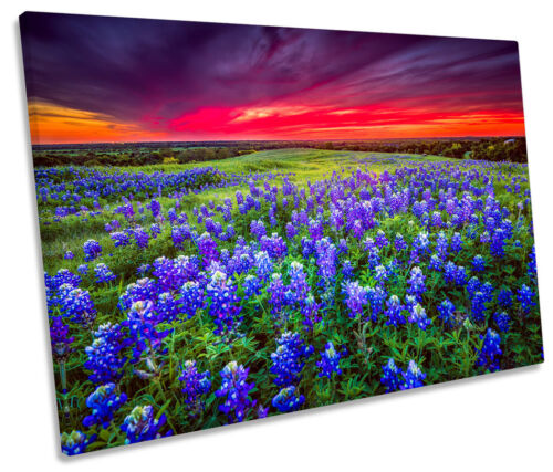 Sunset Landscape Bluebonnet Flowers SINGLE CANVAS WALL ART Picture Print