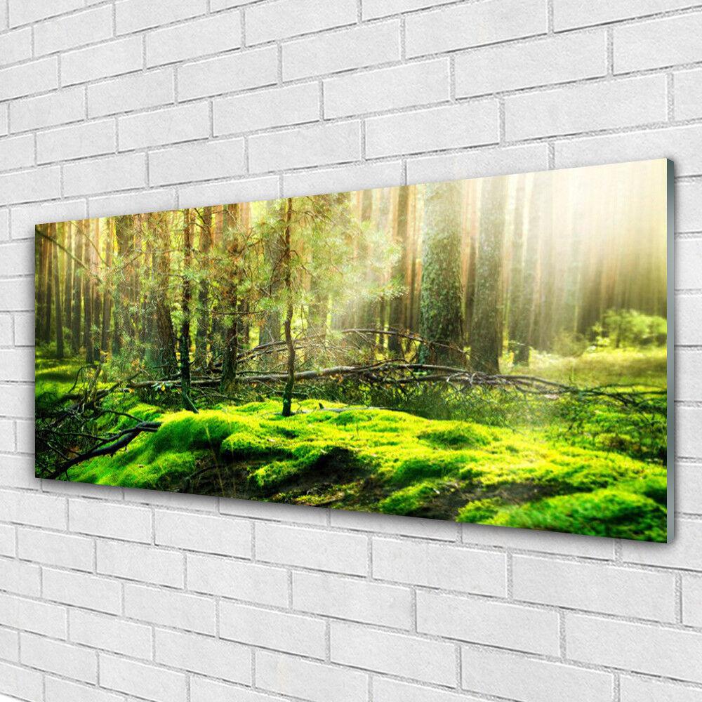 Impression sur verre Image tableaux 125x50 Nature Bryophyte Forêt