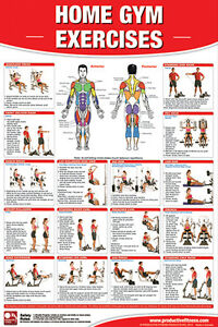 exercise jim step by step chart: Home gym exercises professional fitness gym wall chart poster ebay