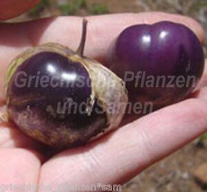 Tomatillo-Physalis-ixocarpa-purple-10-frische-Samen-fuer-Salsa-Mexicana-Balkon