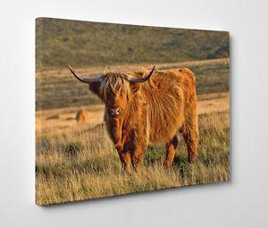 Highland Cow Framed Canvas Art Print Giclee Wall Art Ebay