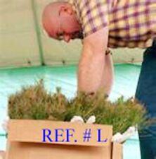 15 Blueridge Smokey Mountain Grown Eastern WhitePine starter evergreen seedlings