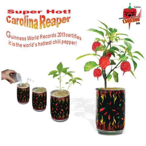 "Carolina Reaper Seeds /""All Included in Growing kit/"" Grow Carolina Reaper Pepper"