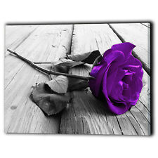 Purple Rose Canvas Framed Flower Love - UK Wall Art Print Gifts - Ready To Hang