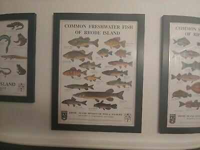 "Cool Vintage Saltwater Fish of Rhode Island Poster//Print 18×24/"""