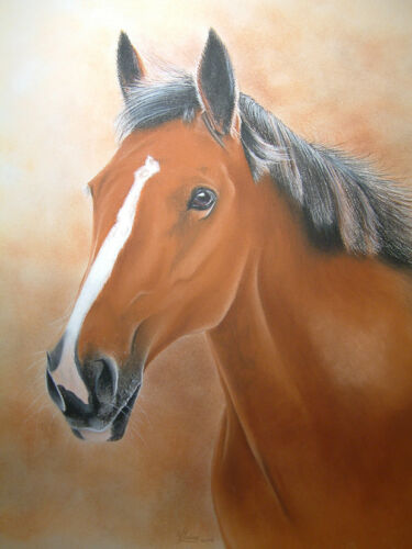 HORSE GREETINGS CARD by UK artist Blank Inside 48 Images To Choose From