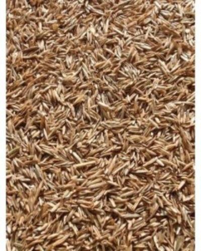 Annual Rye Grass Seed, Cool Season Gulf Rye Grass Seed 5 lb. Pack Grass Seed