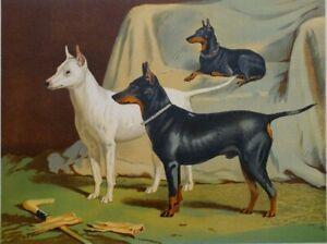 1881 Imprimé Anglais Terrier Vero Shaw CASSELL'S Livre De The Chien