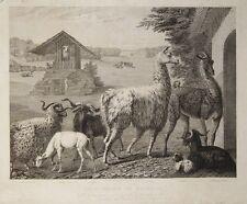 John Christian Zeitter Lama Kaschmir-Ziege Angora-Schaf Wolle Cashmere goat wool