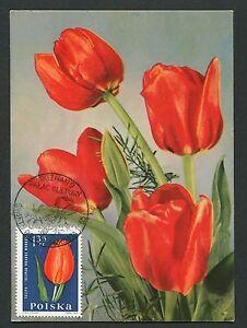 La Pologne Mk 1965 Flore Tulipe Tulip Maximum Carte Carte Maximum Card Mc Cm D6333-afficher Le Titre D'origine Facile à Lubrifier