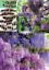 54-semi-GLICINE-Ros-Lilla-PROFUM-Fresco-OMBREGGIAR-e-Risparm-En-el-CLIMATIZZAT miniatura 1