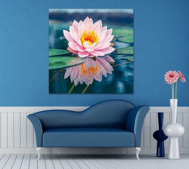 3D Eine blhende Lotus 2445 Fototapeten Wandbild BildTapete Familie AJSTORE DE