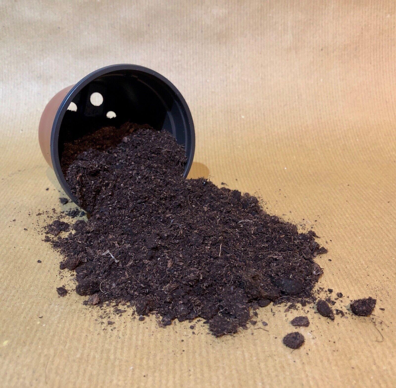1l Irish Sphagnum Moss Peat (Not compost) Carnivorous Plants Soil Venus Fly Trap