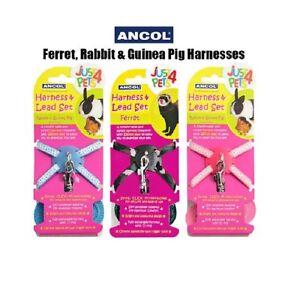 Ancol-Ajustable-huron-Conejo-Cobaya-Arnes-amp-Juego-De-Plomo-Small-Pet-ANIMAL
