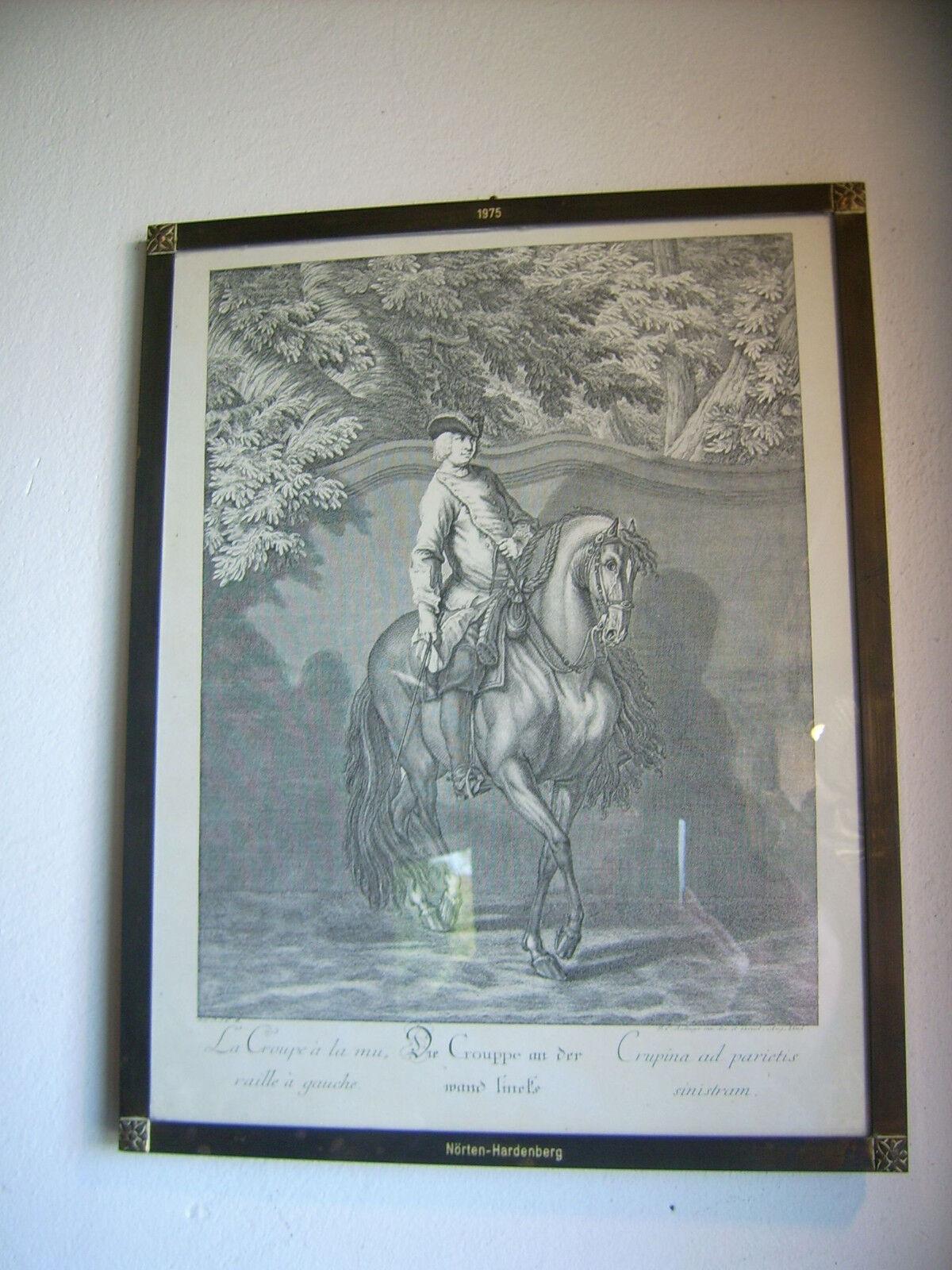Cheval, équitation, Jodhpur, Image, dressage, dressage, dressage, collectionneurs, idée cadeau e39a3d