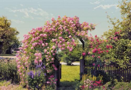 368x254cm Tapete Wandkunst Garten Rosen Sommer Foto Schlafzimmer Wand Kunst