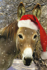 Ansichtskarte: Esel mit Weihnachtsmann - Mütze - Christmas donkey - la bourrique