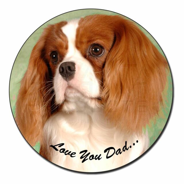 Cavalier King Charles Spaniel Key Ring-Starprint No 1 Auto combined postage