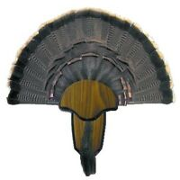Hunters Specialties Turkey Fan Tail & Beard Mount Kit 00849