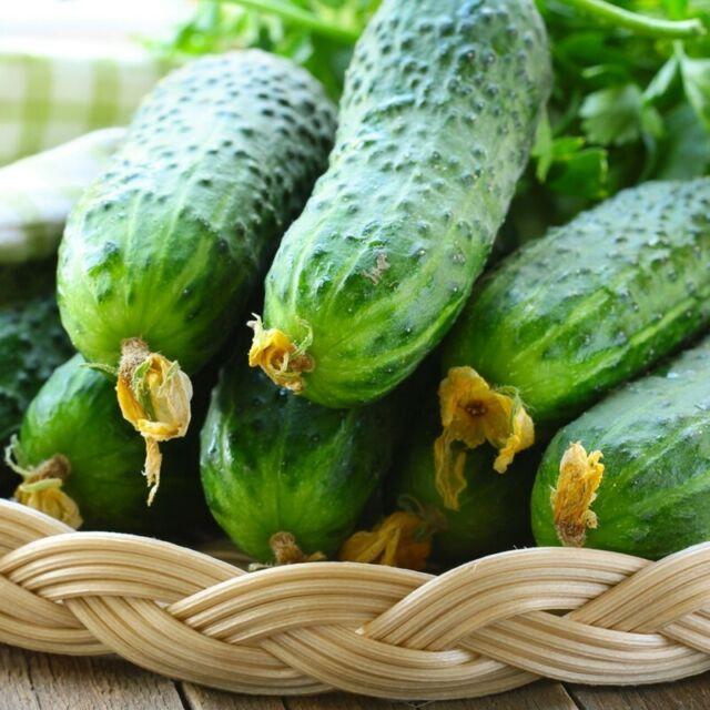 Seeds Cucumber Rodnichok F1