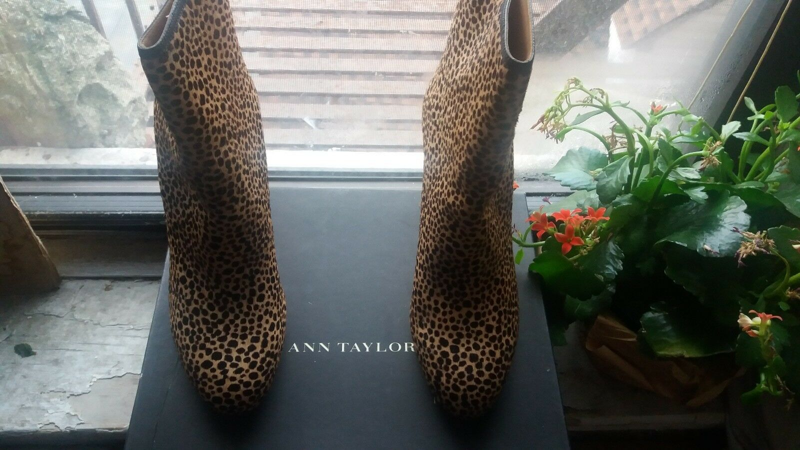 Ann Taylor NADIA cheetah print Ankle Boots $278 NEW size 8.5 SUPER RARE VHTF
