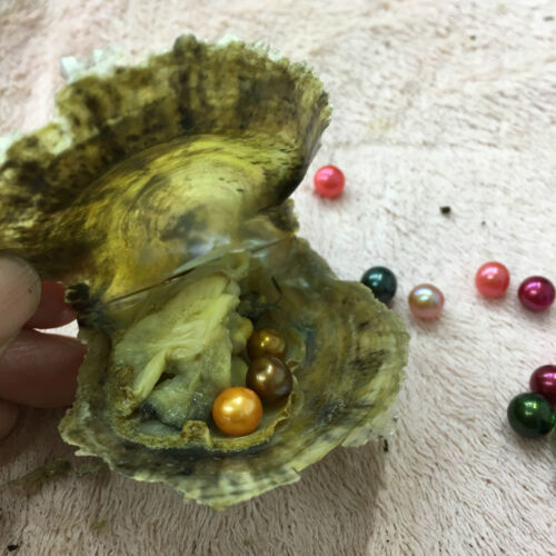 Bulk 6-8mm Pearl Saltwater Akoya Oyster One Round Pearl Mixed Color Party Gift