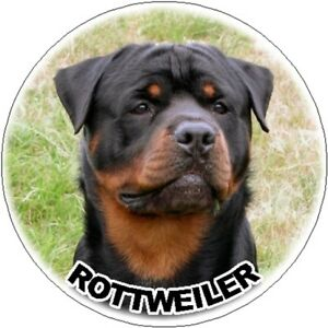 2-Rottweiler-Car-Stickers-Designed-By-Starprint