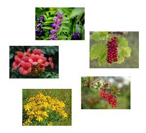Fruehlings-Spar-Angebot-5-schoene-winterharte-Samensorten-fuer-den-Blumengarten