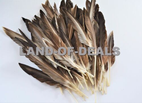 Duck pointer feathers Natural brown loose real feathers for crafts 0.5//1 oz 40