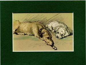 IRISH WOLFHOUND AND SEALYHAM TERRIER DOG PRINT MOUNTED READY TO FRAME