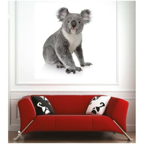 Affiche poster koala 48707332 Art déco Stickers