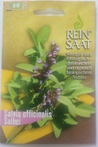 Salbei-Saatgut-Salvia-officinalis-Bio-Biosaatgut