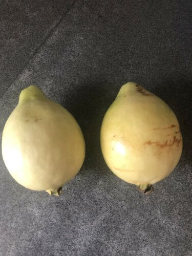 Florida Tropical White//Yellow Pear Guava Fruit Tree 30 Liveseeds