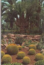 BF22804 elche huerto del cura palmera en forma de abanic spain  front/back image