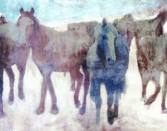 Pi Galerie  Calgery Stampede Civière-image de L'écran Wild-Pferde Troupeau
