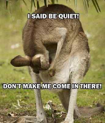 "Funny Kangaroo  refrigerator magnet 3 x 3 /"""